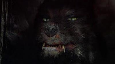 小麦粉をかぶってしまった猫が悪魔に豹変に関連した画像-05