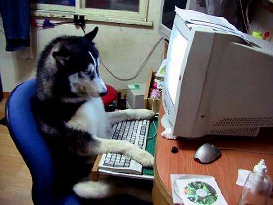 キティちゃんはネコではなかったに関連した画像-06