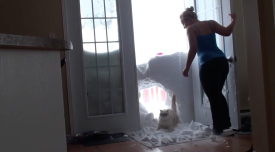 雪の壁を破壊して家に入るネコに関連した画像-04