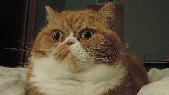 ネコたちが教えてくれる、月曜日のツラさに関連した画像-13