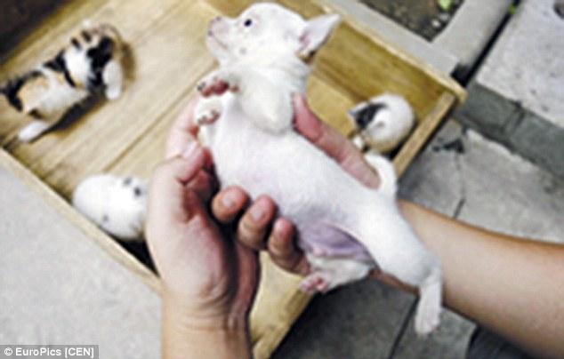 ネコから犬が産まれるに関連した画像-05