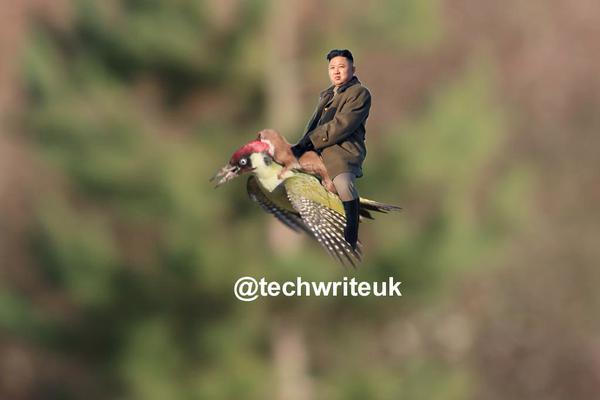 イタチがキツツキの背中に乗って、空を飛んだに関連した画像-11