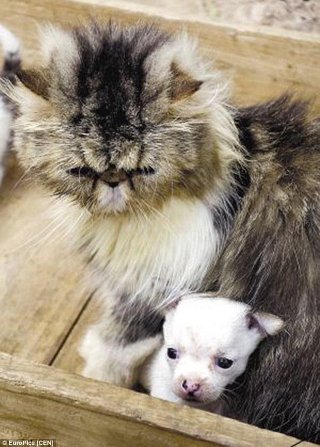 ネコから犬が産まれるに関連した画像-02