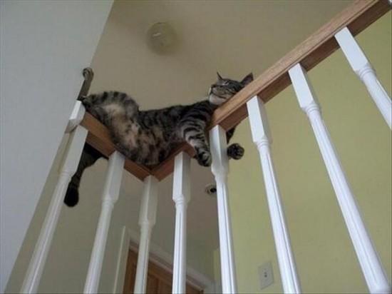 ネコには特別な力が宿っているに関連した画像-06