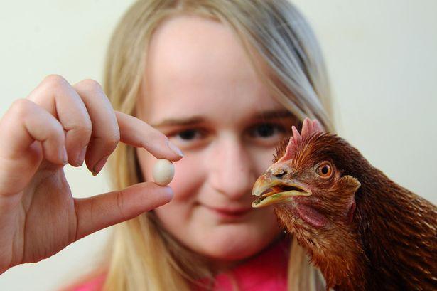 世界最小と見られる「ニワトリの卵」に関連した画像-03