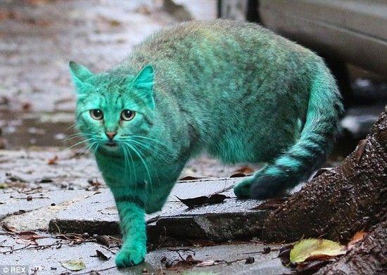 全身緑色の猫に関連した画像-06