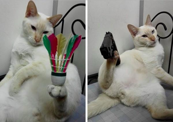 足の上で何でもバランスを取っちゃう天才猫に関連した画像-03