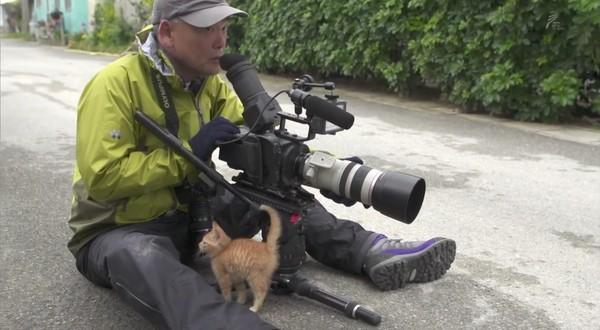 岩合光昭の世界ネコ歩き「沖縄」に関連した画像-04