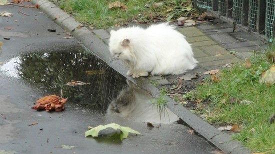 ネコたちが教えてくれる、月曜日のツラさに関連した画像-10