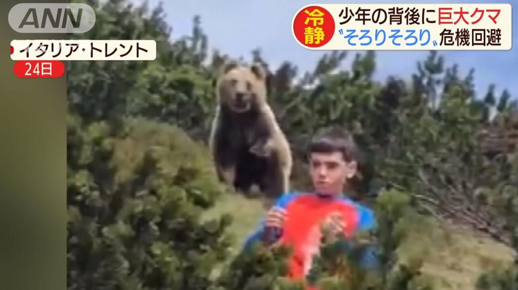 イタリア 熊 クマに関連した画像-03