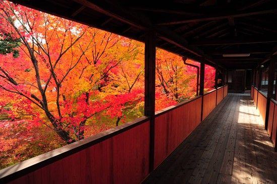 京都のお寺が次々と撮影禁止に関連した画像-11