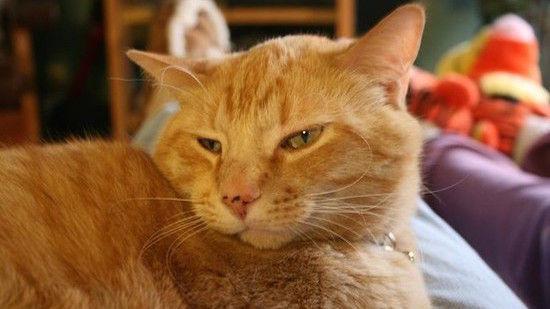 ネコたちが教えてくれる、月曜日のツラさに関連した画像-09
