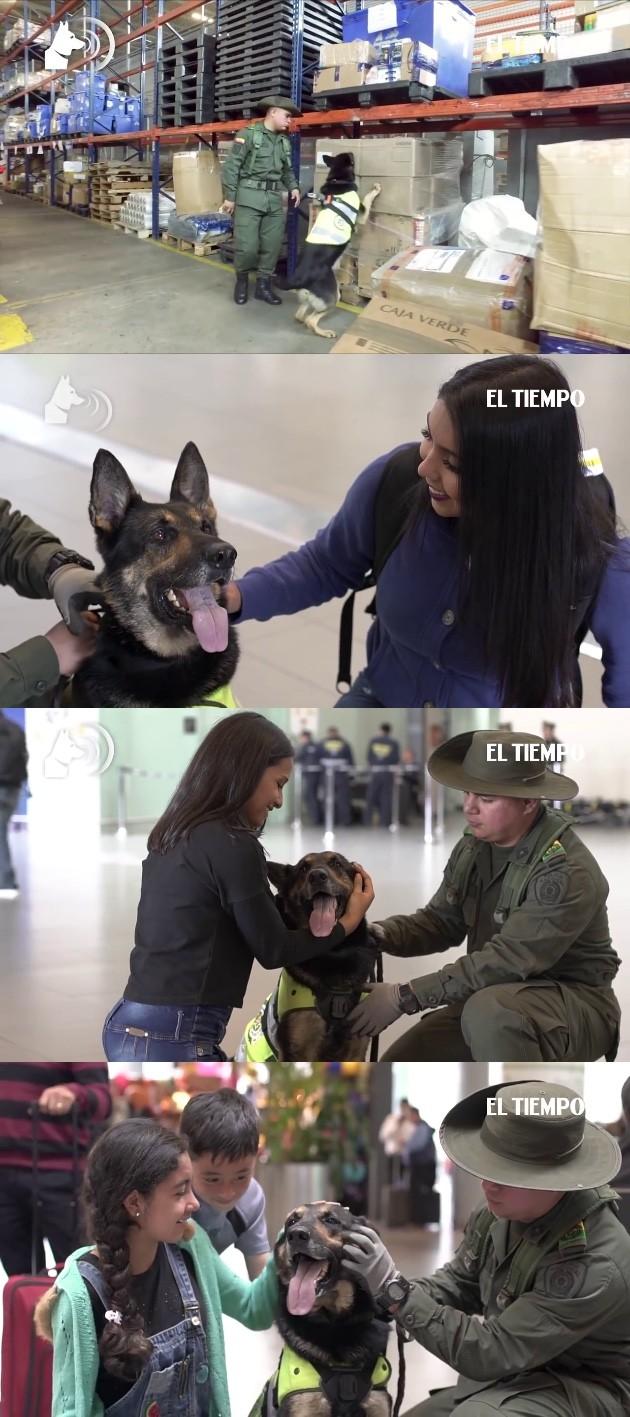 麻薬探知犬の首に報奨金に関連した画像-03