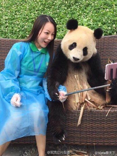 女子力が高いパンダ3