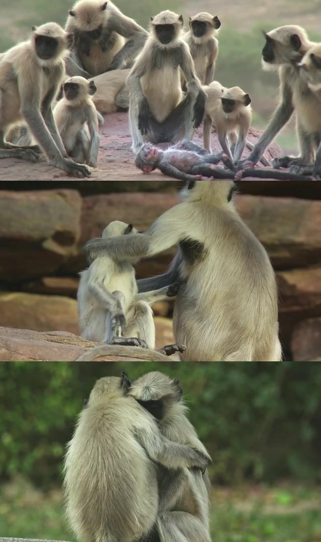 ラングールと猿ロボットに関連した画像-09