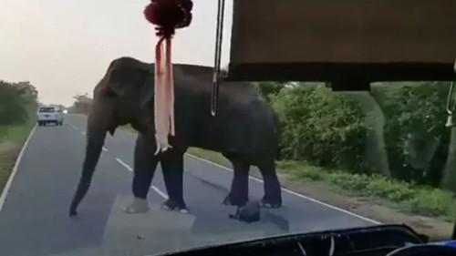 スリランカ ゾウ バナナに関連した画像-01