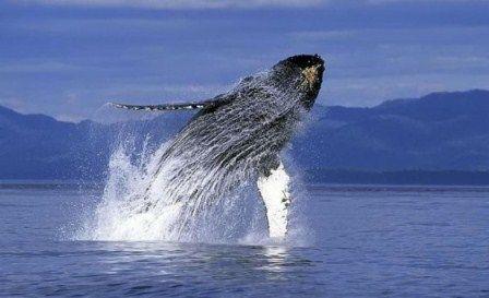 クジラに関連した画像-01