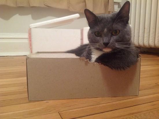 ネコには特別な力が宿っているに関連した画像-04