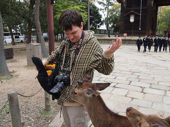 日本では鹿でさえ礼儀正しいに関連した画像-03
