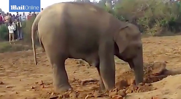 子ゾウが井戸に転落に関連した画像-02