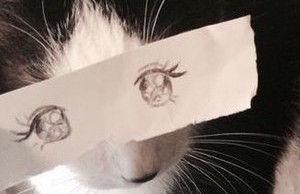 猫モンタージュに関連した画像-08