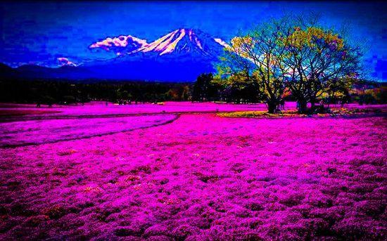 美しい日本に関連した画像-05
