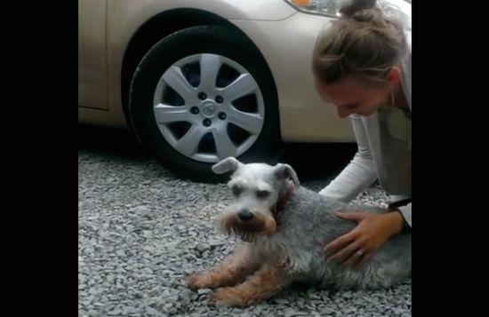 2年ぶりに家族と再会した犬が嬉しさのあまり気絶に関連した画像-01