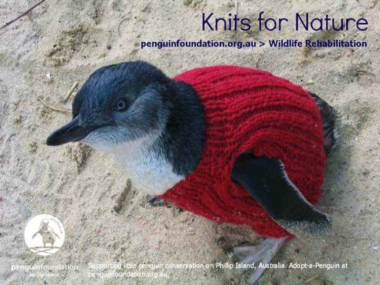 ペンギンにセーターをに関連した画像-04