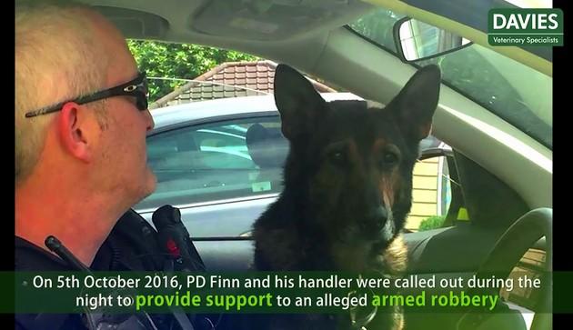 警察犬フィン君に関連した画像-03
