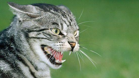 ネコをずっと触っているとストレスを与えてしまに関連した画像-01