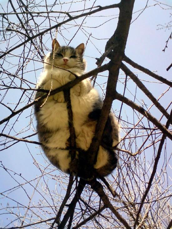 ネコには特別な力が宿っているに関連した画像-05