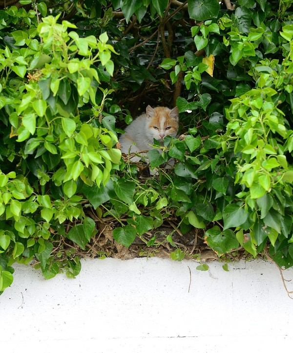 猫の巣に関連した画像-05