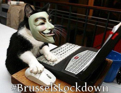 ベルギー、「ネコ」画像でテロリストを撹乱に関連した画像-05