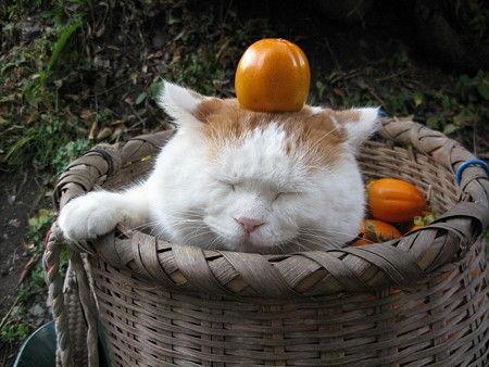 日本のネコ『のせ猫』が海外で評判に関連した画像-03