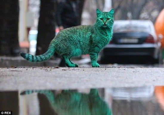 全身緑色の猫に関連した画像-07