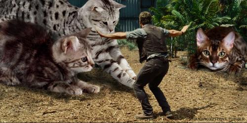 「ジュラシック・ワールド」の恐竜を猫にに関連した画像-12