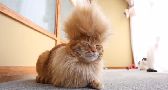 「猫かつら」装着例に関連した画像-10