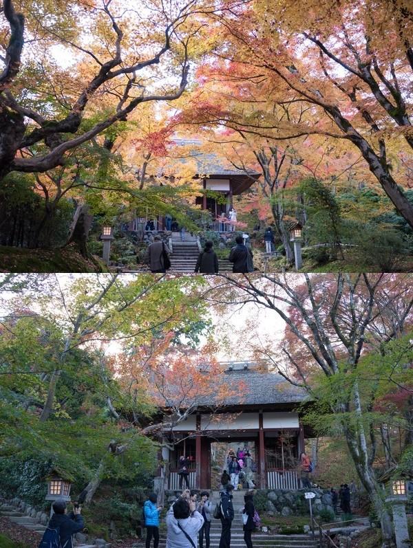今年2015の京都の紅葉はガッカリに関連した画像-05