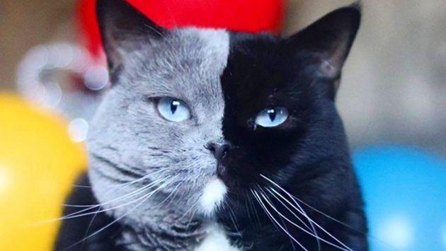 猫 模様 ナルニアに関連した画像-01