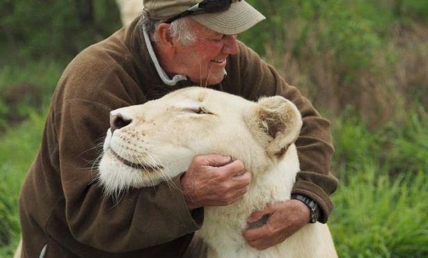 自然保護活動家 白ライオン 南アフリカに関連した画像-05