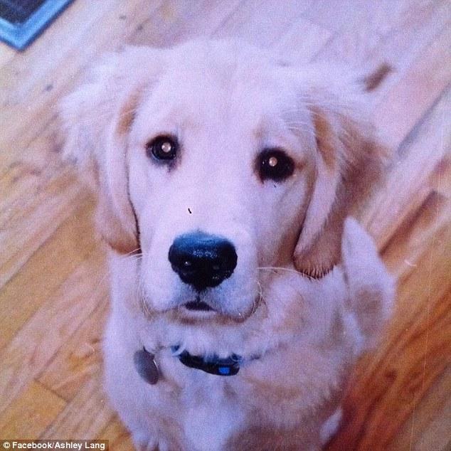 愛犬を弔うため遺灰をまくとビックリ!天に昇る一匹のワンコの姿がに関連した画像-06