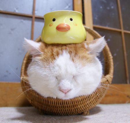 日本のネコ『のせ猫』が海外で評判に関連した画像-08