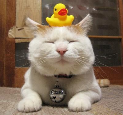 日本のネコ『のせ猫』が海外で評判に関連した画像-05