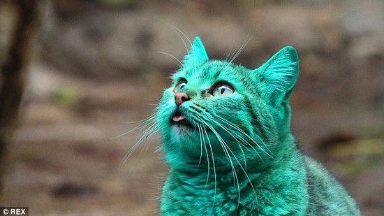 全身緑色の猫に関連した画像-01