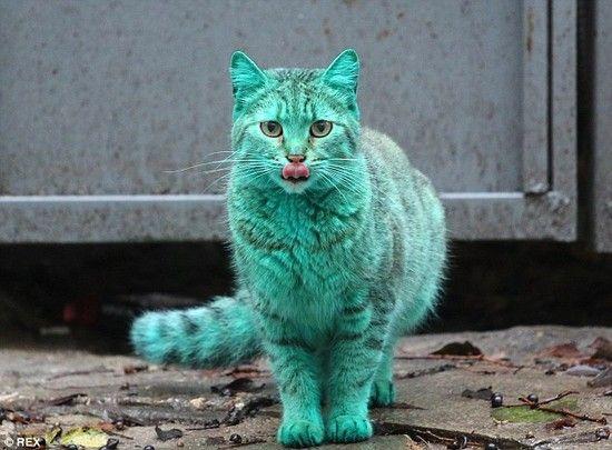 全身緑色の猫に関連した画像-02
