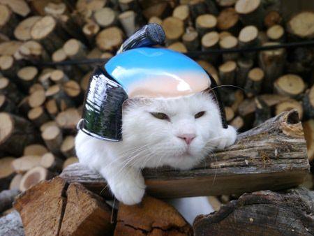 日本のネコ『のせ猫』が海外で評判に関連した画像-04