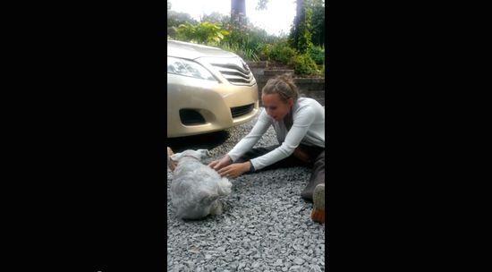 2年ぶりに家族と再会した犬が嬉しさのあまり気絶に関連した画像-04