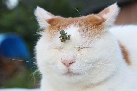 日本のネコ『のせ猫』が海外で評判に関連した画像-01