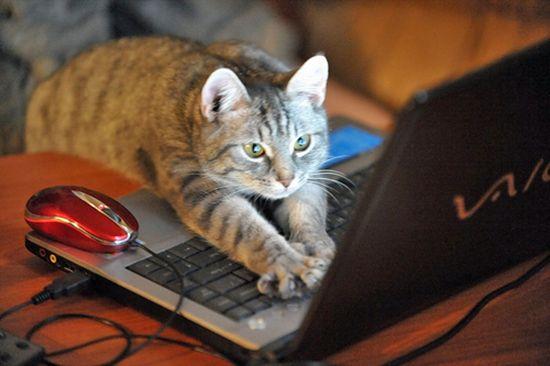 キティちゃんはネコではなかったに関連した画像-05