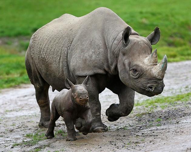 カジランガ国立公園に関連した画像-07